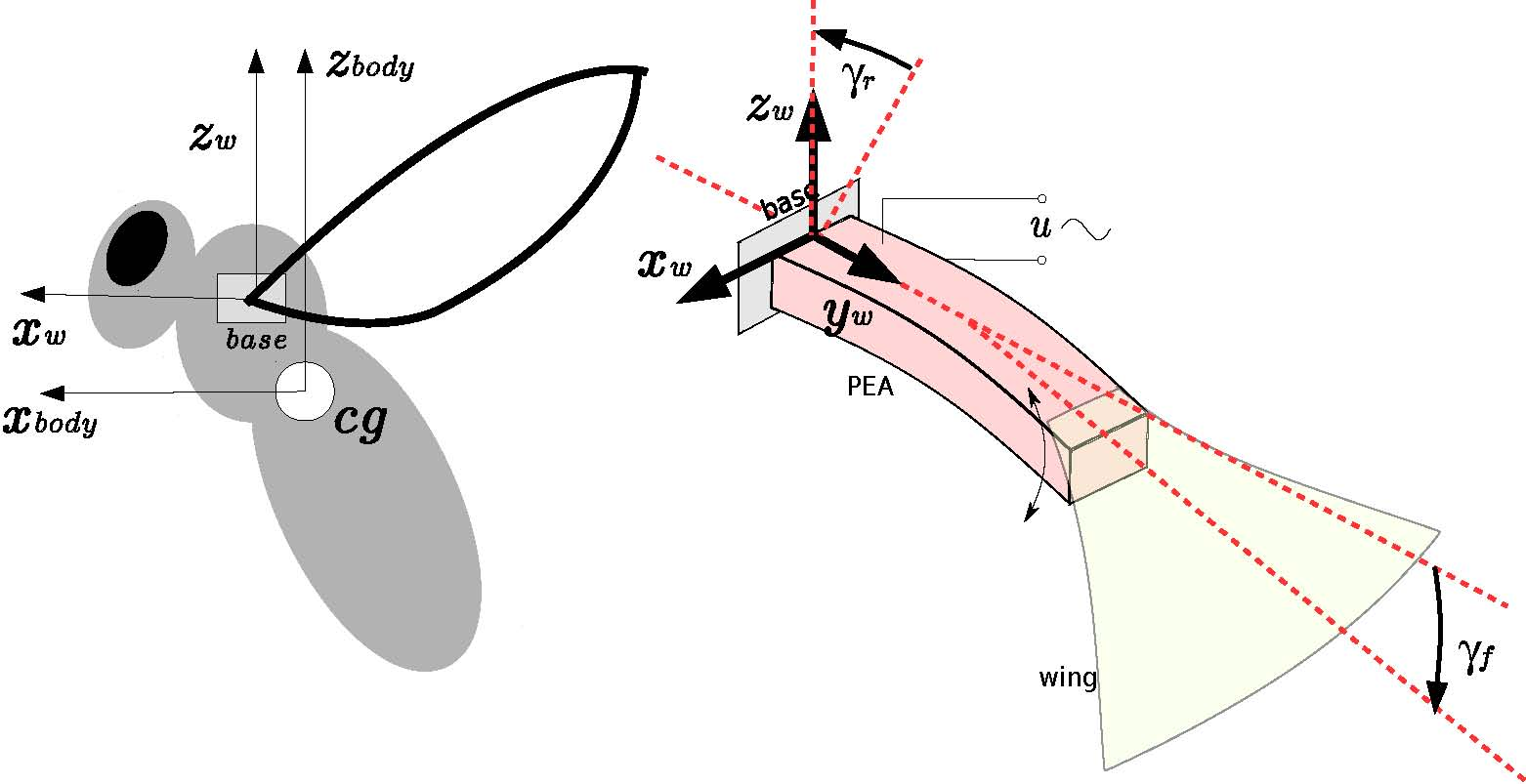 development of a flapping wing mechanism Developed to ensure that the wings could be reproduced consistently  of the  wings, flapping mechanism for large amplitude generation, and table 1.