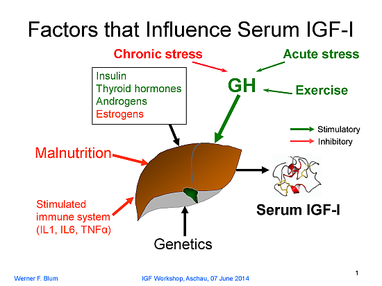 relationship between growth hormone and igf 1 does it work