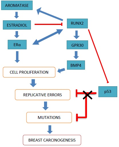 Sampathophysiology main article carcinogenesis cancers are