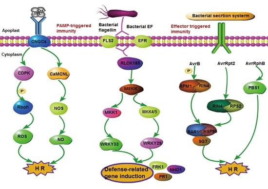 expression strategies for heterologous genes pdf