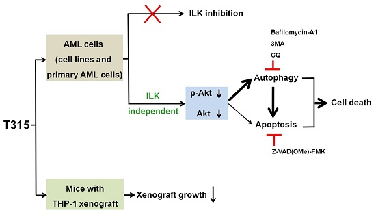 IST5-002 inhibits prostate cancer xenograft tumor growth