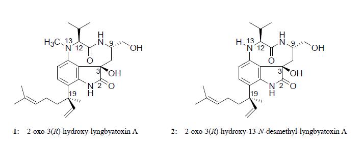 marine drugs free fulltext two new lyngbyatoxin