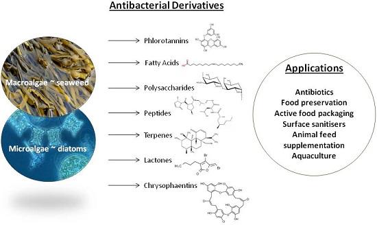 Marine Drugs Free Full Text Antibacterial Derivatives