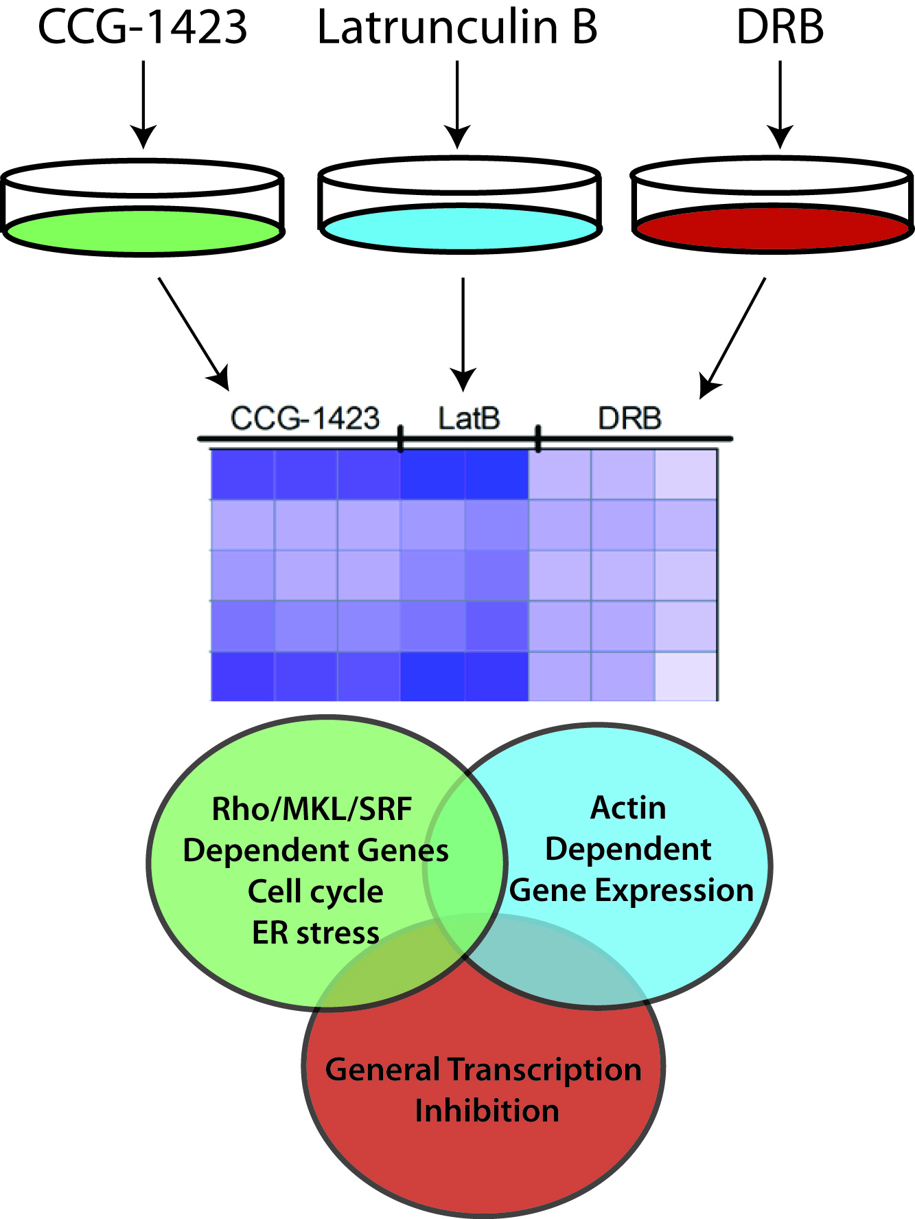 Cyclin D1 Promotes Androgen-Dependent DNA Damage Repair in Prostate Cancer Cells