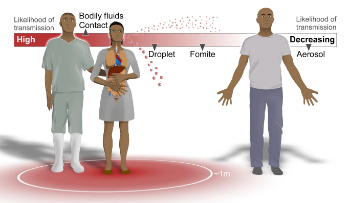 an analysis of the characteristics transmission and types of the ebola virus What we know about ebola virus transmission in humans past outbreaks provide opportunities to examine human-to-human transmission of ebola viruses.