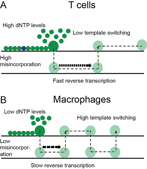 articles on cell mutation
